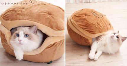 日推「銅鑼燒寵物枕」貓奴狂搶購 網友買回家實測:主子進去後就不出來了!