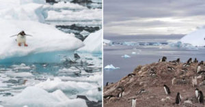 南極洲破記錄「飆20度高溫」 科學家憂心:企鵝恐少一半!