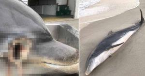 美海岸驚現「2隻野生海豚」被當槍靶 官員爆怒:懸賞60萬緝兇!