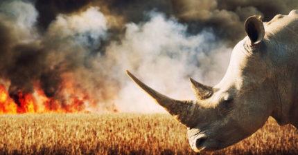 地球「第六次大滅絕」被人類加速了!科學家:未來新武肺會一直出現