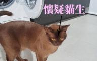 兩光飼主害貓皇「洗衣機滾12分鐘」還得等脫水!她:只剩6條命
