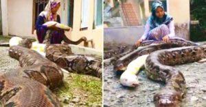 少女4歲愛上蟒蛇 每天跟6條巨蟒「一起洗澡睡覺」:牠們超乖!