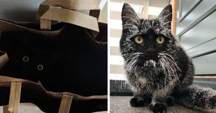 養黑貓不吉利?20個「黑貓是最棒的貓」原因 施展影分身沒難度!