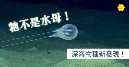 深海發現「透明火雞」新物種 學者「觀察5年」發現:人類無法接近