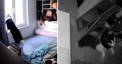 好奇狗狗一天都在幹嘛 看監視器「7點→5點」超鼻酸:我是牠的全世界