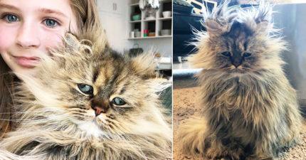 永遠沒睡飽!每天「睡到髮型悲劇」 大叔貓從沒睡醒過:早八該廢除啦