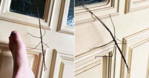 家裡驚見「巨型樹枝」黏門上 近看「4隻手腳會動」嚇傻:是活的