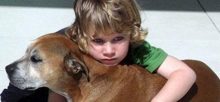 為什麼狗狗活得比人短