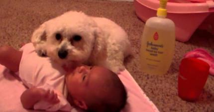 狗狗保護娃娃