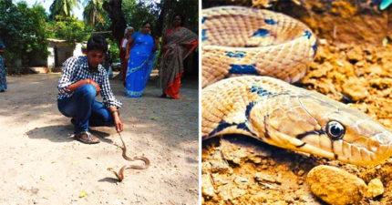 衰男一個月被蛇咬8次「全都同隻」 快嚇瘋:躲到別村也找到我