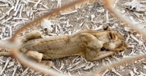 野生動物「餓到皮包骨」 6年來動物園「98%生物無法存活」