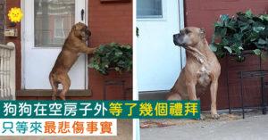 在「空房子外」傻傻堅守幾個禮拜!志工哭著「向狗狗解譯」:已經不在了